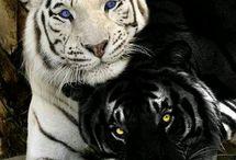 Zvieratá