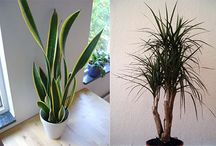 Filtering Houseplants / Houseplant