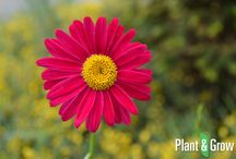Vaste planten / In dit bord vind je een greep uit het vaste planten assortiment van tuinplanten webwinkel, Plant & Grow