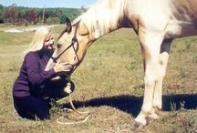Training Horses / Training Horses And Yourselves