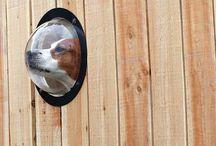 Cooles Zeug für Hund und Mensch / Hier findet ihr unsere biunte Sammlung von coolem Zeug für Mensch und Hund