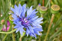 Wildflower love / by Tammy McCutchen
