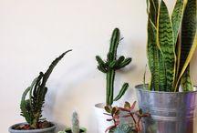 Plants | Plantinhas / Hortas, Cactos e Suculentas ♥
