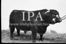Dublin Equestrian Shows / The R.D.S. is famous for its horse shows / by Irish Photo Archive