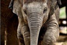 elephant / by Pop_dace_ love