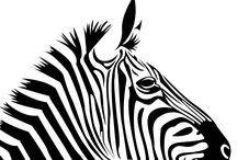 Animal // Inspiration Zebra