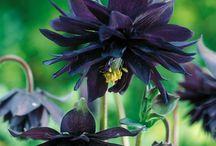 Garden: Perennial Flowers / Varieties to swoon over / by Stasha Switzer