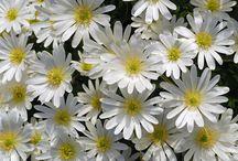2014 flower garden