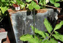 Gardening / Hi meet your city gardner
