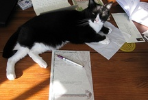 Feline Postal Brigade / Cats with mail