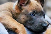Puppies! / by Jenna