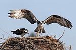 Birds / by Jennifer Owen