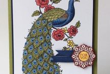 Perfect Peacock Stampin' Up! Stamp Set Greeting Cards