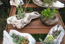 Plants n stuff