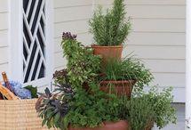 Growing Herbs / Hierbas Aromáticas