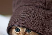 sweet cutie