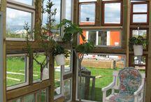 Invernadero / invernadero hecho con ventanas de desecho