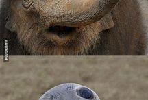 mókás állatok