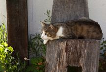 **Hangulatfokozó** 2014.07.11. / Cicáink tudják, mi a jó - nekik. Azt mondják azonban, ahova a macska fekszik, ott az ember számára nem kedvező a pihenés. Néha azonban nem a földkéreg alatti vízerek, hanem kényelem alapján döntenek…