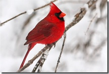 Birds / by Kim @ HSKids & Families