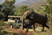 Wild Safaris / You never truly experienced life, with adrenaline pumping through your veins, until you are within a reaching distant of the majestic giants and creatures of the African wild. Experience the thrill of being face-to-face with African lions, rhinos, elephants and many more.