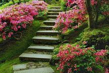 Záhrada -terasy