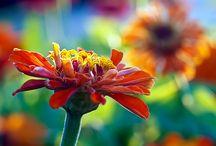 My Secret Garden / by Vikki Enns Trimmell