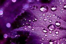 Color Collections: The Royal Purple