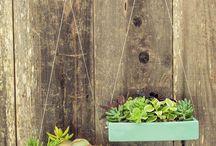 Fence hanging plants