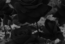 • Dark •