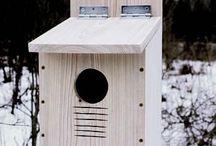 casetta uccelli