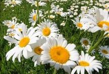 meadows in sunlight