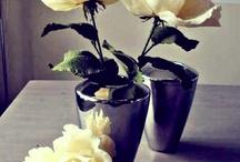 ~~ Photo creations ~~
