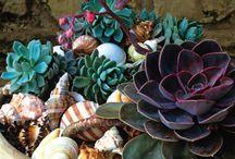 Seashells & Succulents