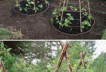 trädgårdslandet