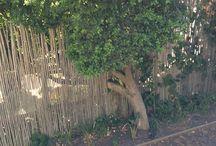 Schoorl tuin