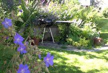 Geranium / Bumble bee garden
