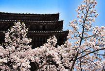 Kyoto / by Wendy Lok