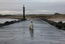 Kutya kereső