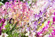 Garden / by Louisa Liddicott