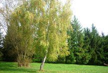Jesenná príroda očami detí / Fotografie, ktoré nafotili deti