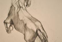 konie szkice