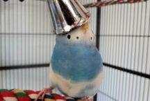 Parakeets, Tiels & Other Small Birds / by BirdSupplies.com