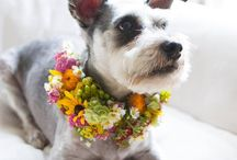 Pet Wedding Flowers