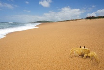 Scenic Views of Zimbali