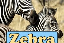 African Animals / African animals facts, pictures, information and conservation. I'm growing this board as an educational resource and will include articles from Active Wild and other sources.