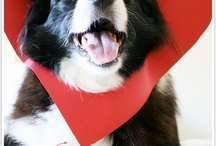 Valentine's Day Love / For the love of pets on the love holiday.