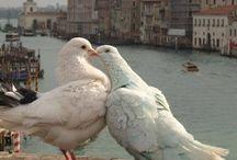 Italy, Venice...etc...