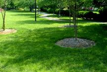 It's Time to Grow Green / Tips on how to maintain a beautiful green lawn and lush yard.