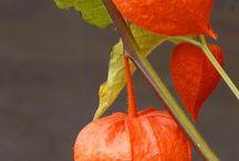 Orange Flowers / Bright & Cheerful